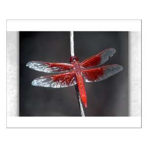 Small Poster Red Flame Dragonfly